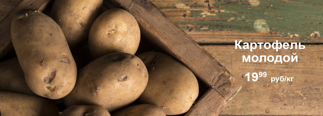 картофель 19,99